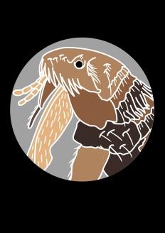 11-flea